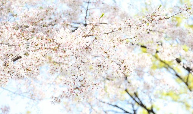 葉桜の季節に君を想うということ 考察